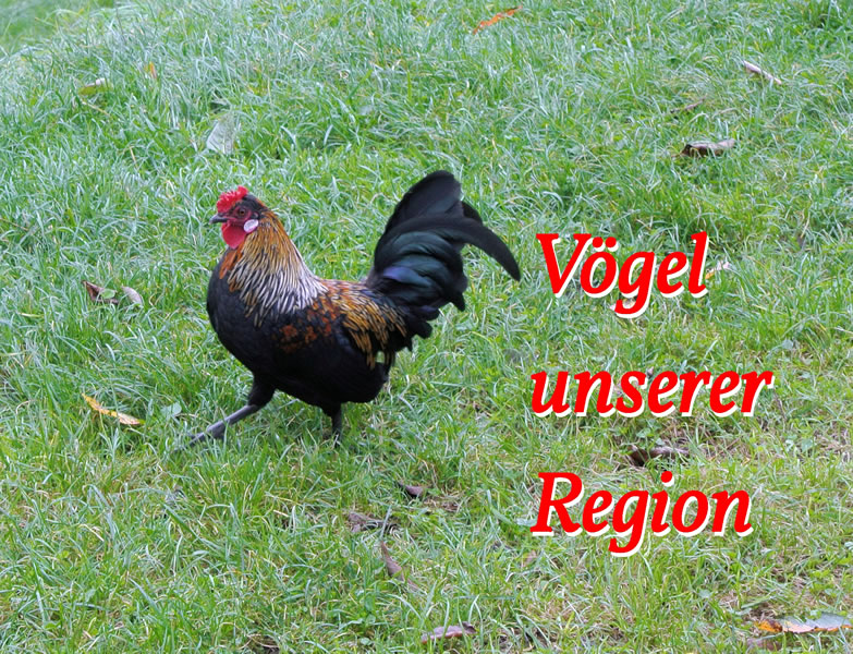 Bild von einem Hahn auf einer Wiese. Quelle: BUND