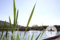 Blick durch eine Wasserpflanze auf das Naturbad Aachtal. Foto: Ulrike Klumpp Fotografie.