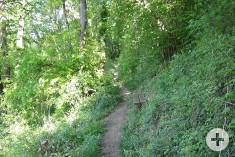 Schmaler Weg am Südhang des Rosenegg